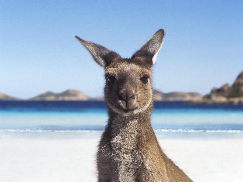 Aussie John